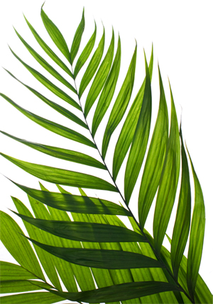 palm-sunday-00