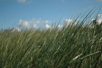 Grass and Sky (DTF301137)